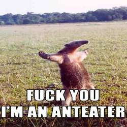 .fuck.you.i.am.an.anteater.